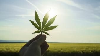 Le cannabis et ses répercussions sur le milieu de travail Online Training Course